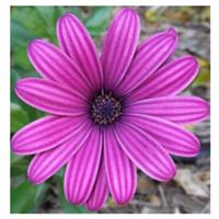 Pink flower meditation