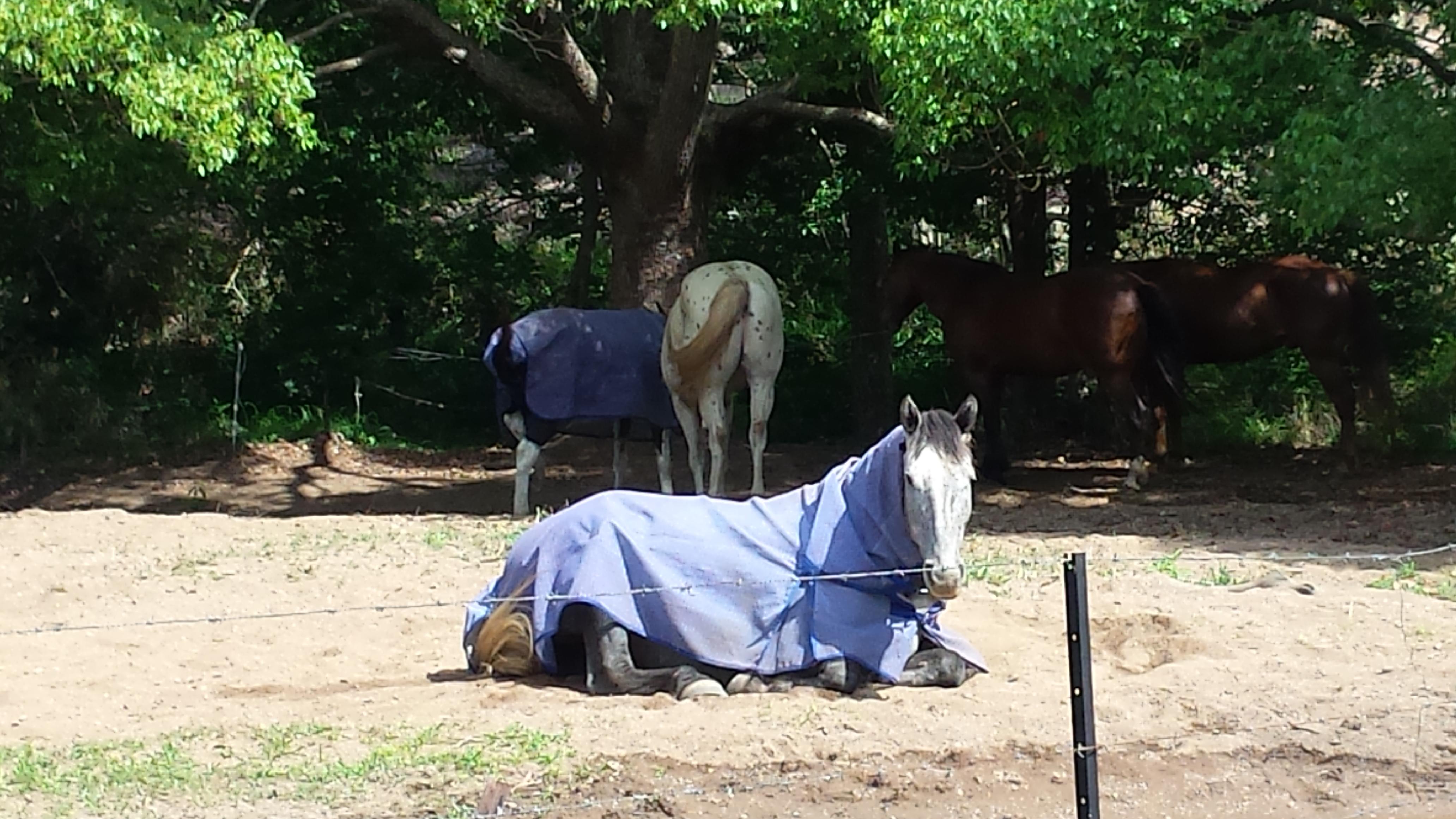 horse - symbolism